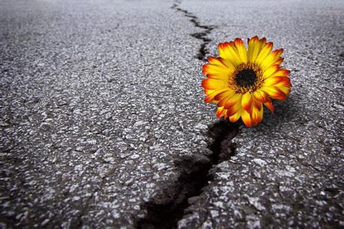 Your Inner Strength – Resilience